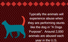 Animal abuse occurring in movies