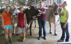 Erf family raises award winning dairy cattle