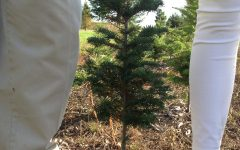 Local Krugers tree farm provides a environmentally friendly option for Christmas.