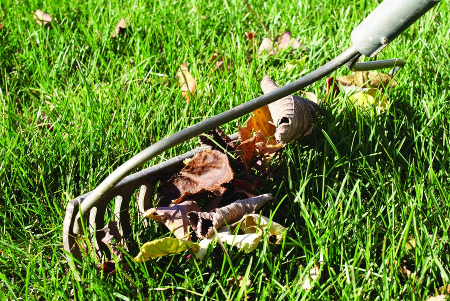 Rake a Difference Day sweeps students into action