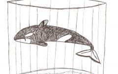 """""""Blackfish"""" exposes harsh reality behind orca captivity"""