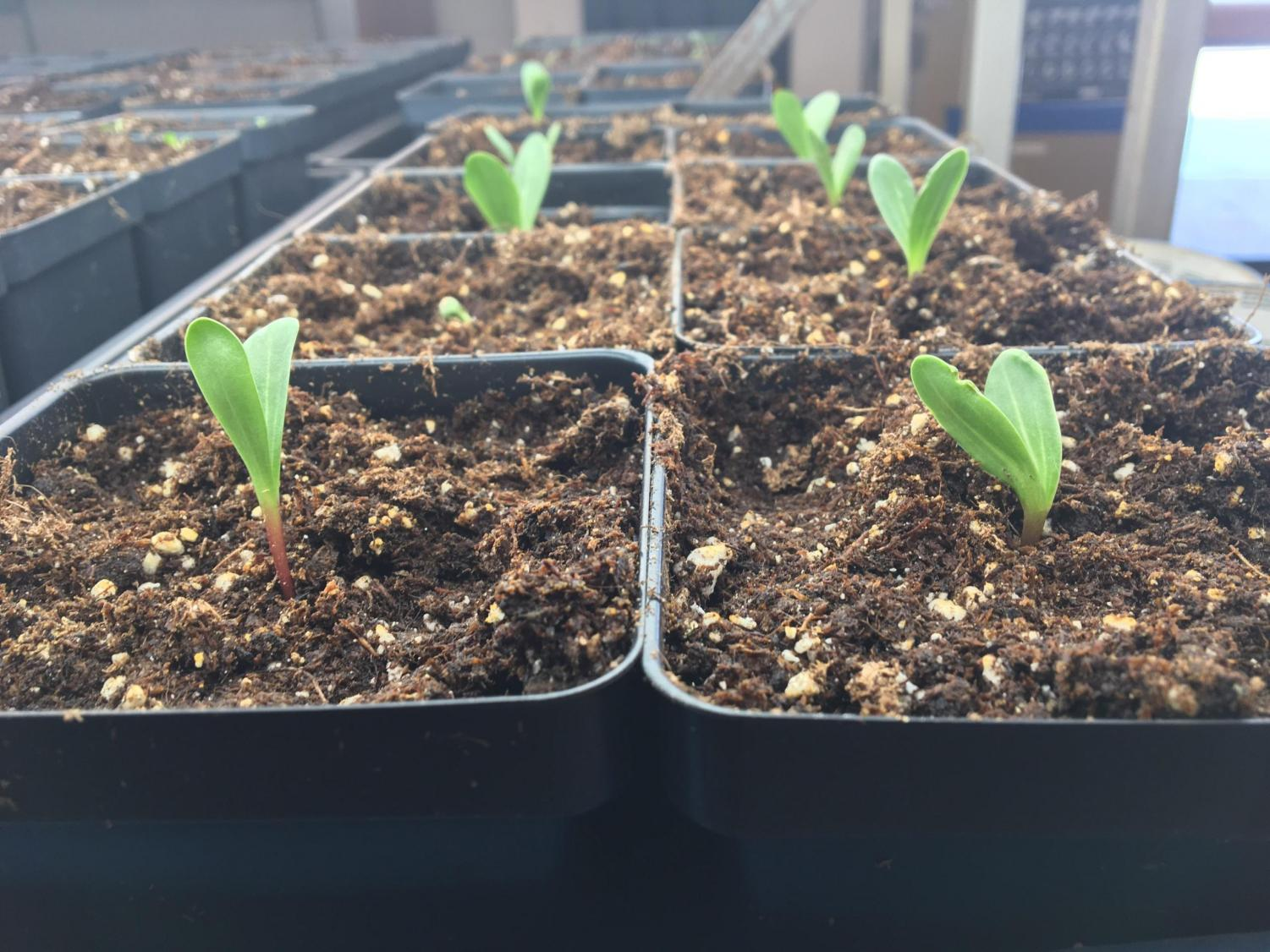 Students in science teacher Glenn Boettcher's wildlife course are currently growing plants in the school greenhouse. There is an array of environmental classes offered at the high school, even including an environmental club.
