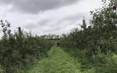 Here is a picture from Afton Apple orchard with green path way. A cloudy day with a family looking at the apples to pick out.