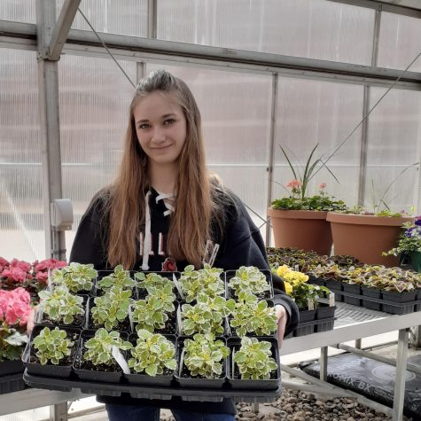 Senior FFA reporter Brianne Johnson prepares for the Plant Sale on May 7 and 8 by transplanting and trimming plants. The sale took place along the curb at Stillwater Area High School to allow for social distancing.